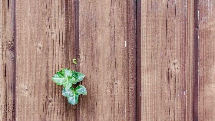 Comment nettoyer sa palissade en bois ?
