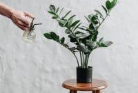 Comment bien entretenir ses plantes d'intérieur ?
